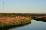 Grape fields across a canal, small thumbnail